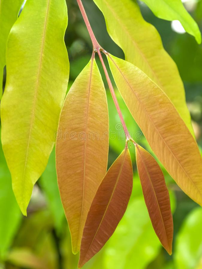 Ramifichi con le foglie colorate immagini stock