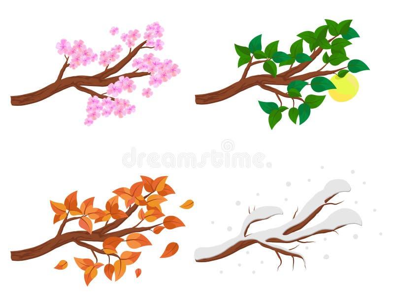 Ramifichi in quattro stagioni - la molla, l'estate, l'autunno, l'inverno Raccolta di di melo isolati su fondo bianco Verde illustrazione di stock