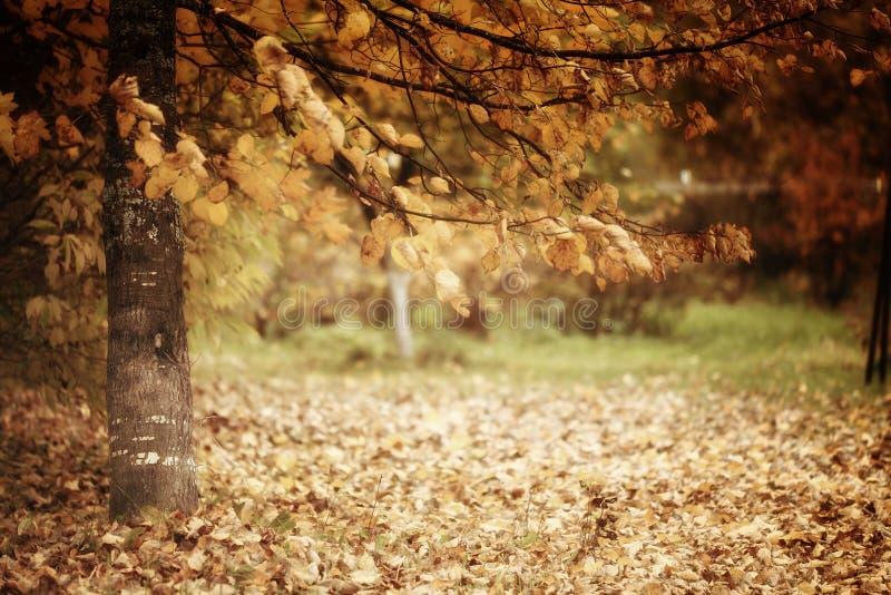 Ramifique com paisagem amarela do autmn das folhas imagem de stock royalty free