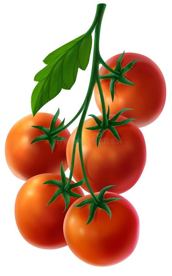 Ramifique com tomates frescos ilustração stock