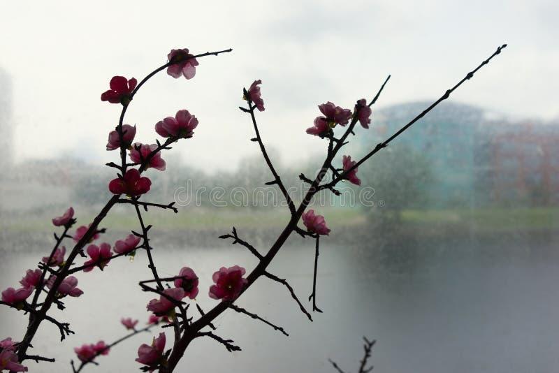 Ramifique con las flores artificiales en un fondo de casas imágenes de archivo libres de regalías