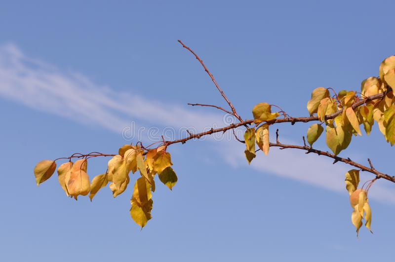 Ramifique con las hojas en octubre imagen de archivo libre de regalías
