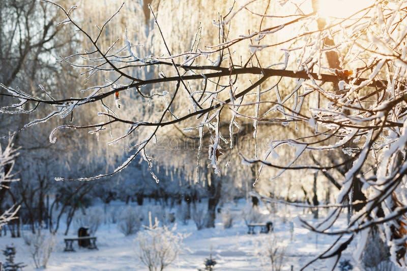 Ramifique na neve no luminoso do sol imagens de stock