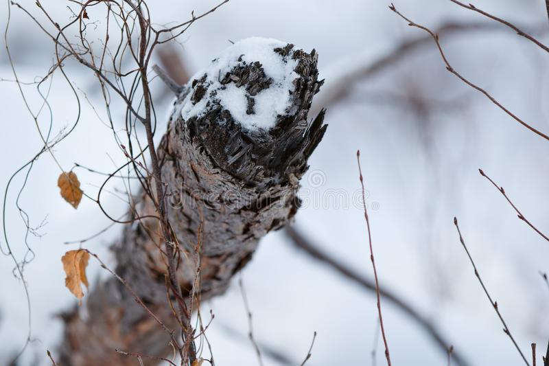 Ramifique no inverno com neve imagens de stock