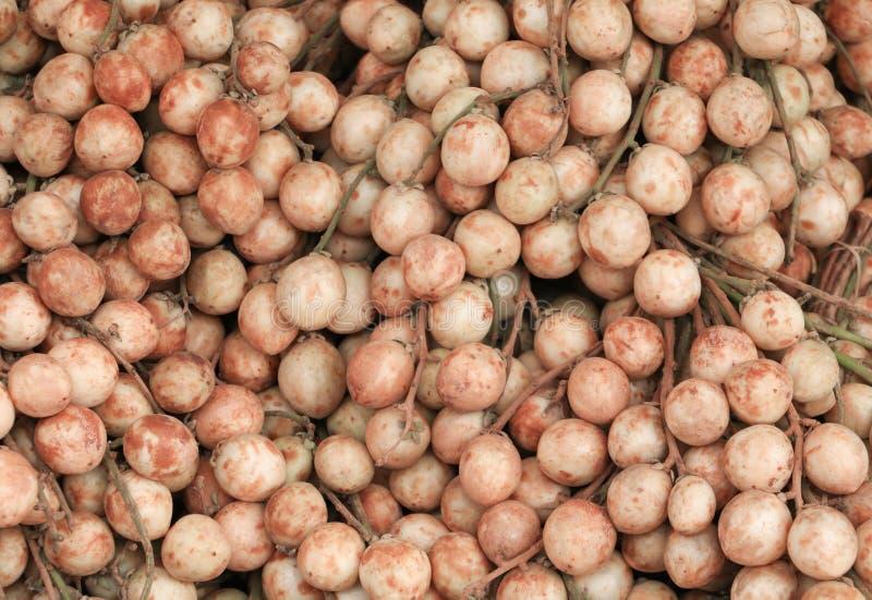 Ramiflora Lour de Baccaurea o uva birmana fotos de archivo libres de regalías