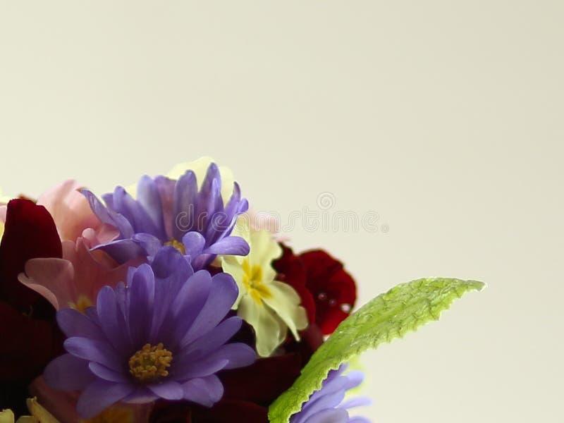 Ramillete macro de colorido, flores de la primavera a la parte inferior dejada de imagen fotografía de archivo