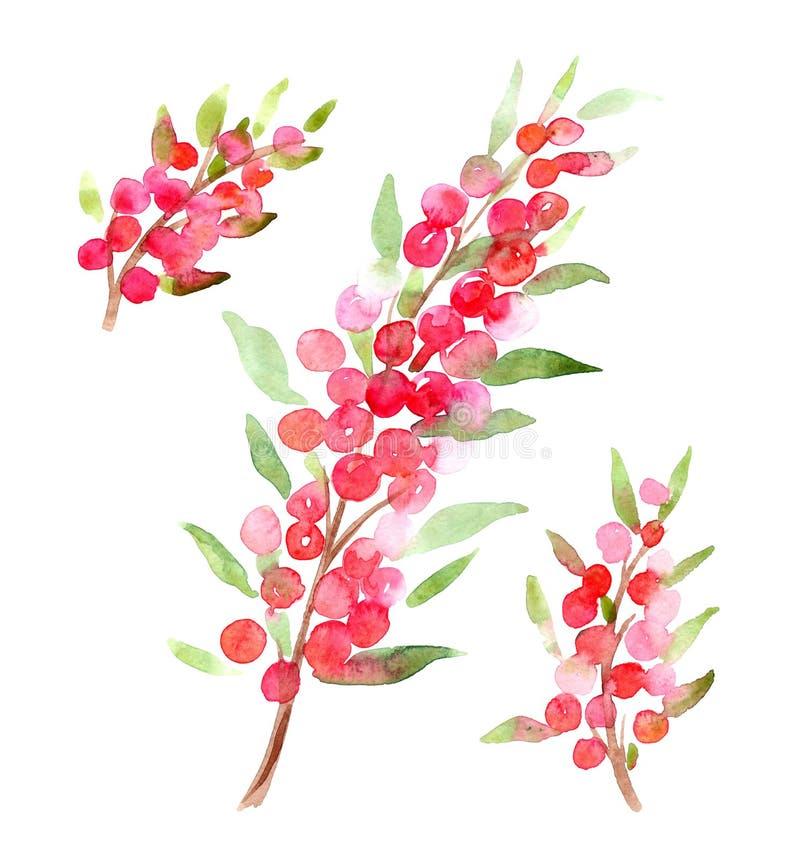 Ramita abstracta de la acuarela con las bayas rojas libre illustration