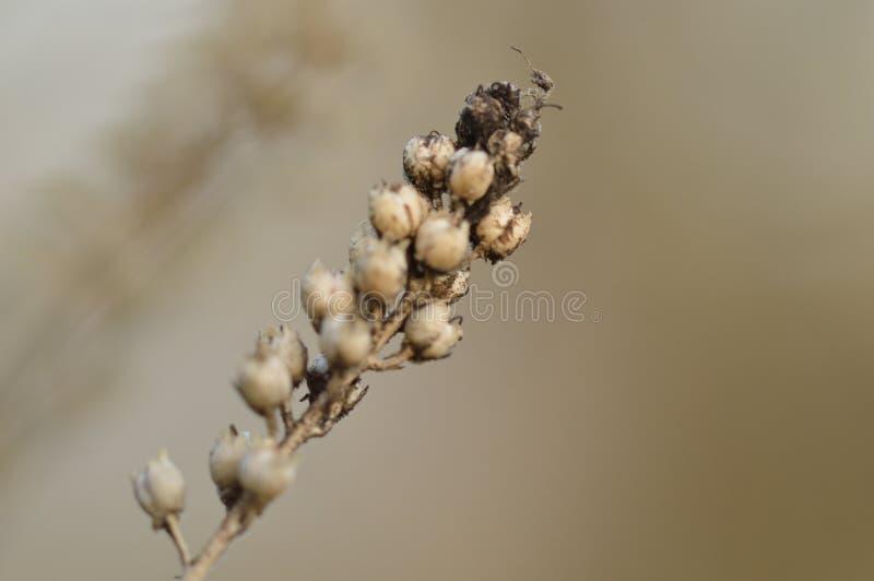 Ramita con las semillas imagen de archivo libre de regalías