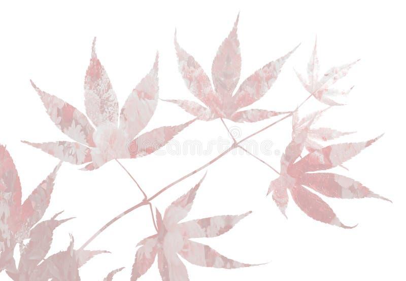 Ramita del arce japonés con diseño floral stock de ilustración