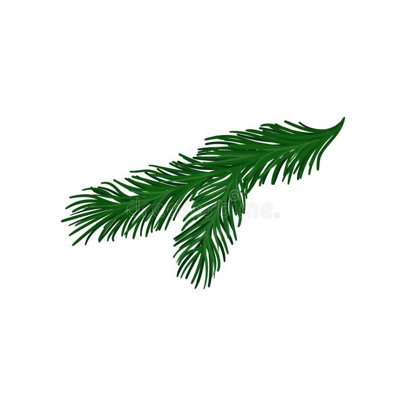 Ramita verde del árbol de abeto con las espinas dorsales cortas Planta de la Navidad Objeto natural Vector plano para el cartel o stock de ilustración