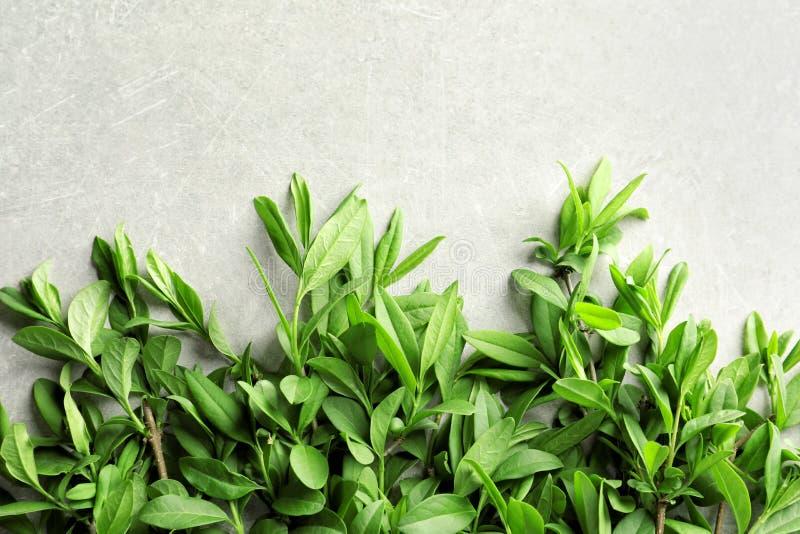 Ramitas con las hojas del verde de la primavera imágenes de archivo libres de regalías