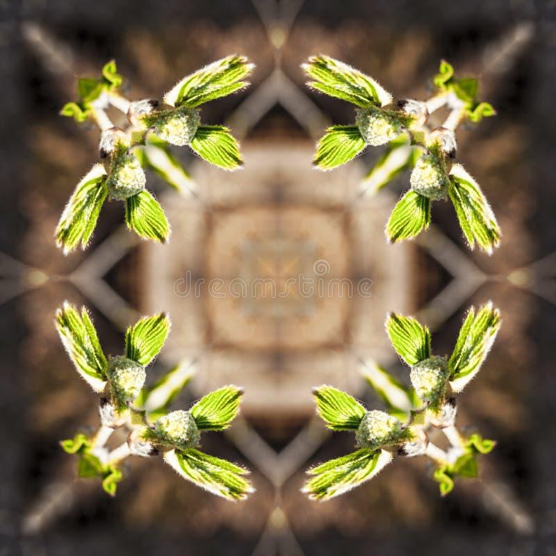 Ramitas de la primavera con los brotes y las peque?as hojas, lanzamientos jovenes, macro ilustración del vector
