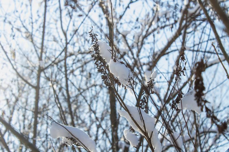 Ramitas del árbol cubiertas de la escarcha y de la nieve en el fondo del bosque del invierno en nieve fotografía de archivo libre de regalías