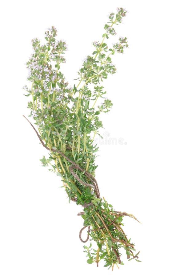 Ramitas del tomillo de la hierba fotografía de archivo libre de regalías