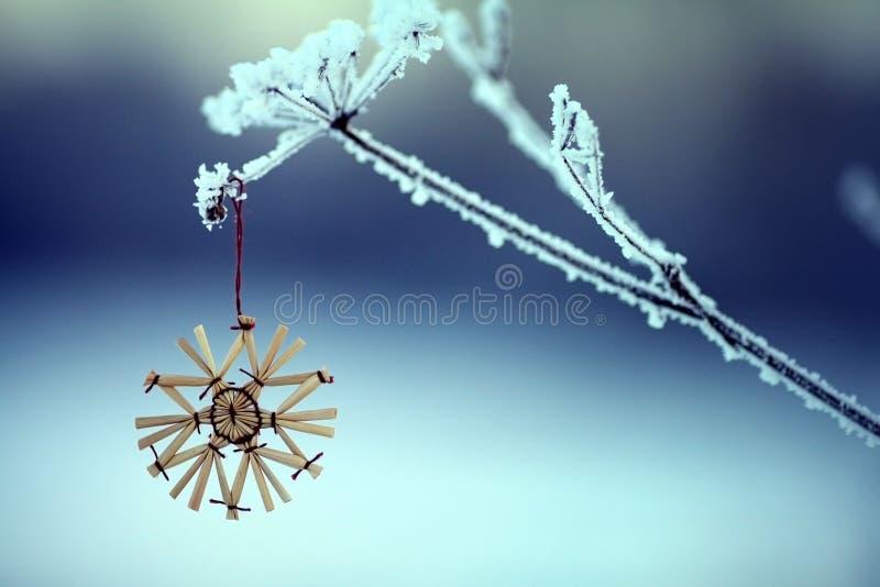 Ramitas e hierba del invierno cubiertas con helada y nieve fotografía de archivo libre de regalías