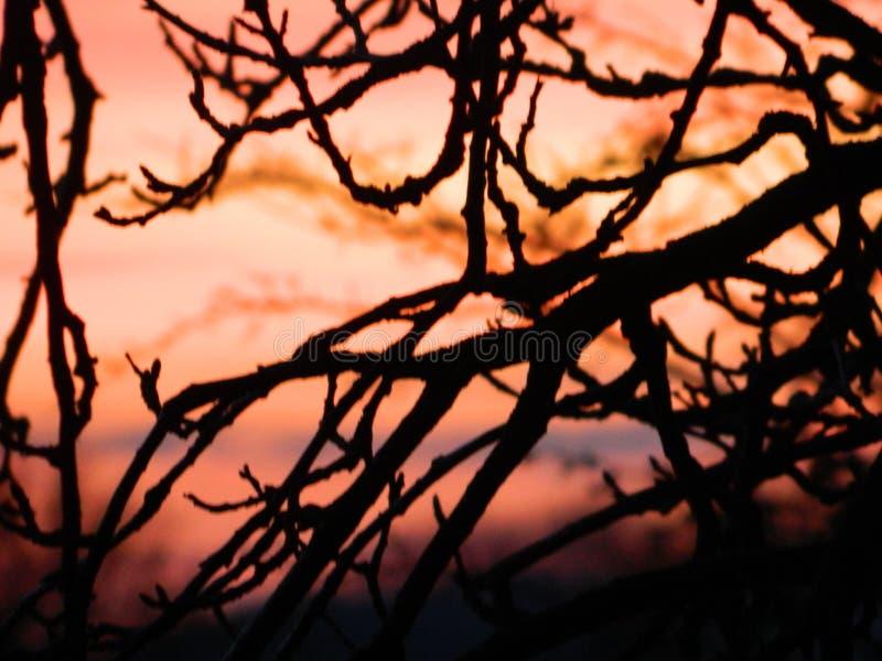 Ramitas en puesta del sol fotos de archivo