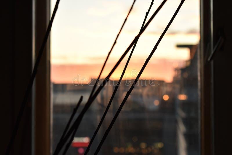 Ramitas finas y puesta del sol imagen de archivo