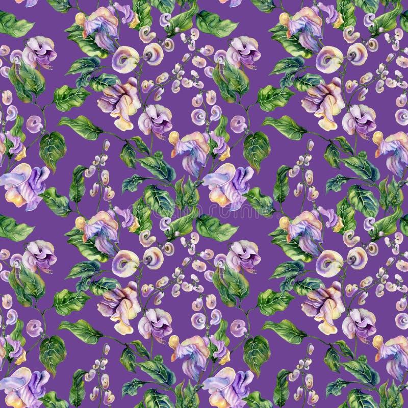 Ramitas hermosas de la vid del caracol con las flores brillantes en fondo púrpura Modelo floral inconsútil Pintura de la acuarela libre illustration