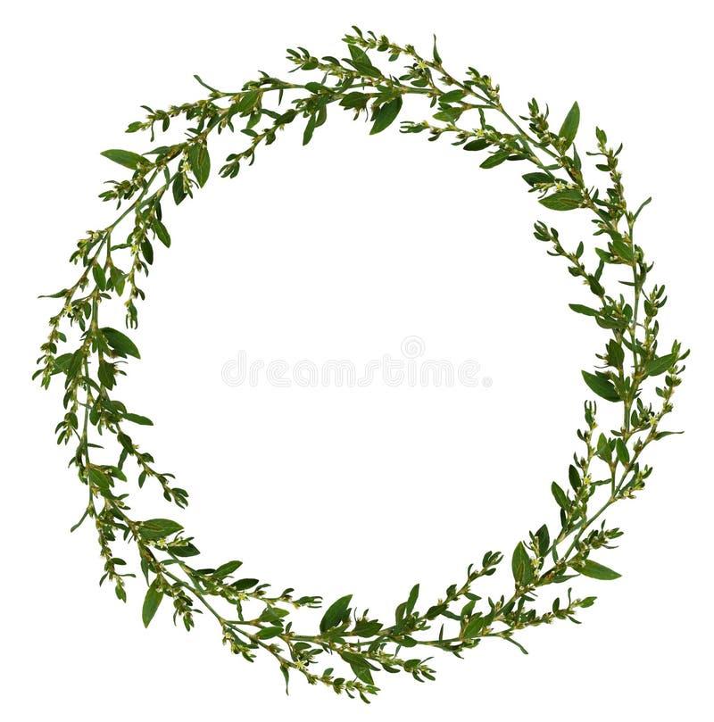 Ramitas salvajes con las hojas verdes y las pequeñas flores blancas en un marco redondo imágenes de archivo libres de regalías
