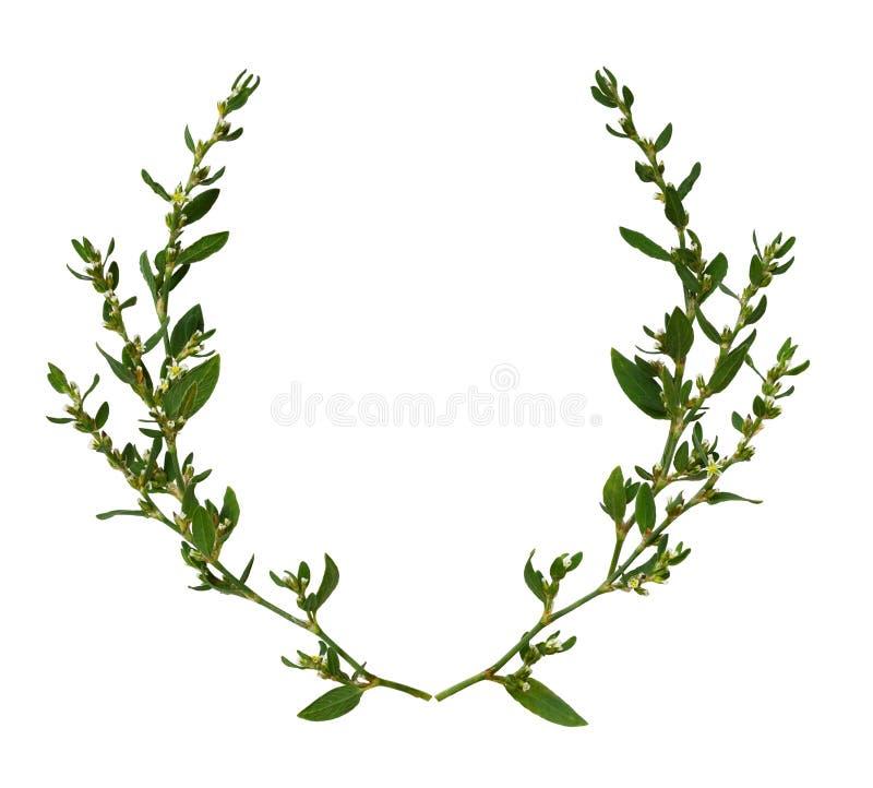 Ramitas salvajes con las hojas verdes y las pequeñas flores blancas en un marco redondo fotos de archivo