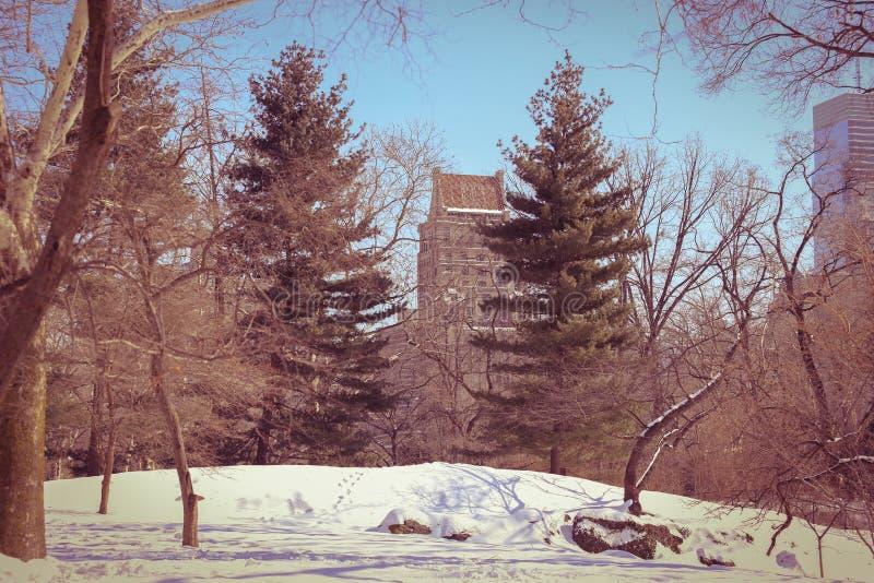 Ramitas secas del invierno y nieve blanca en el Central Park imagen de archivo