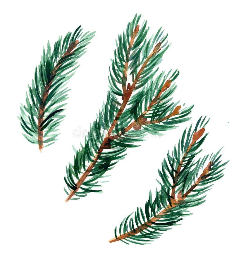 Ramitas Spruce libre illustration