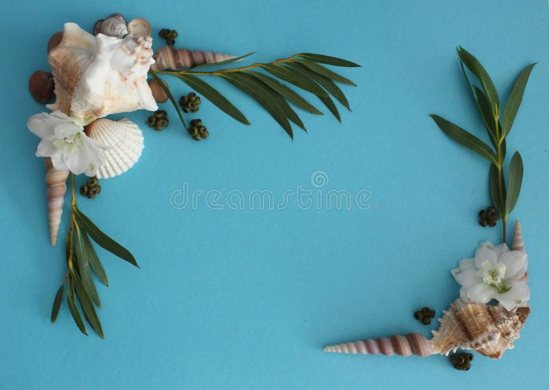 Ramka z muszli i Eucalyptus zdjęcie stock