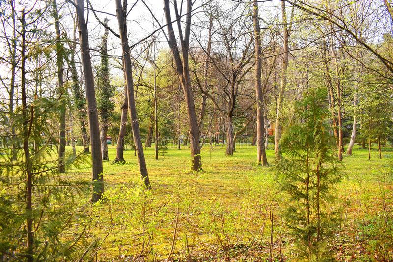 Ramnicu Valcea, Roemeni? 02 04 2019 - Het mooie Zavoi-Park in een de lente zonnige dag stock fotografie