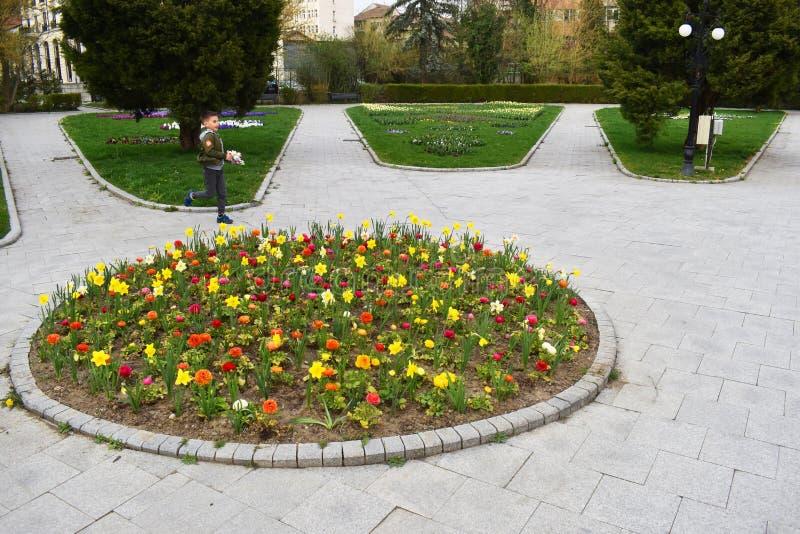 Ramnicu Valcea, Romania 02 04 2019 - Il bello parco di Zavoi in un giorno soleggiato della molla immagine stock