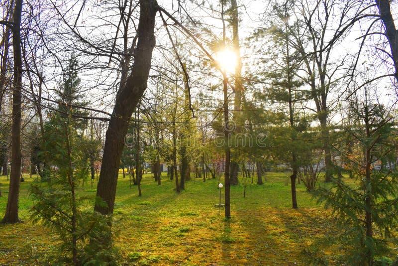Ramnicu Valcea, Romania 02 04 2019 - Il bello parco di Zavoi in un giorno soleggiato della molla immagine stock libera da diritti