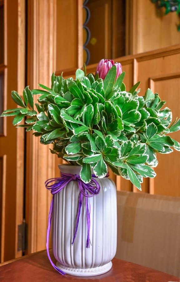 Ramo africano del protea en el florero blanco imagen de archivo