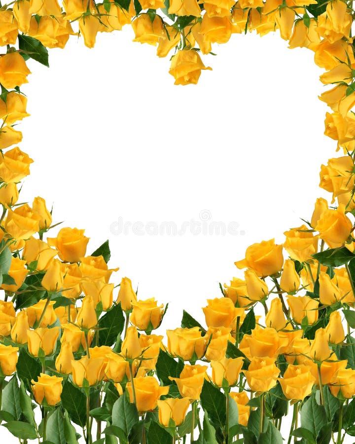 Ramo amarillo brillante de las rosas aislado en blanco fotos de archivo libres de regalías