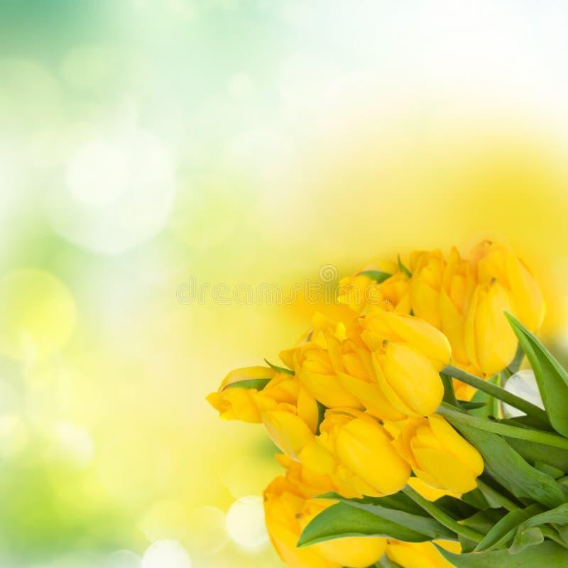 Ramo amarillo de los tulipanes fotografía de archivo libre de regalías