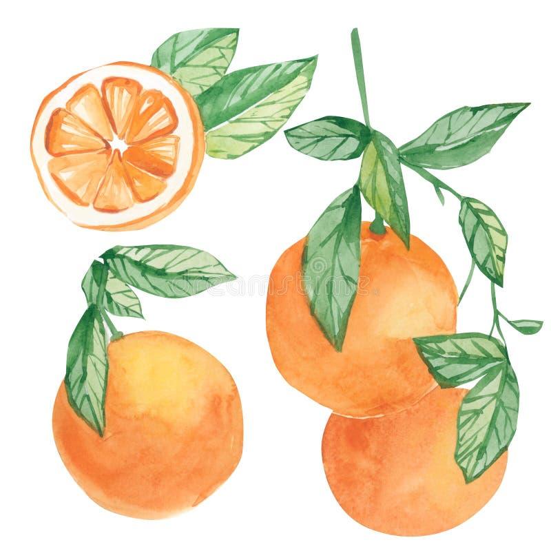 Ramo arancio di arragement della raccolta di estate dell'acquerello Frutta dipinta a mano del limone sul ramo con la fetta isolat illustrazione vettoriale