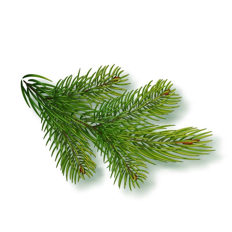 Ramo attillato isolato su fondo Ramo dell'albero di Natale Illustrazione realistica di vettore di Natale Elemento di progettazion royalty illustrazione gratis