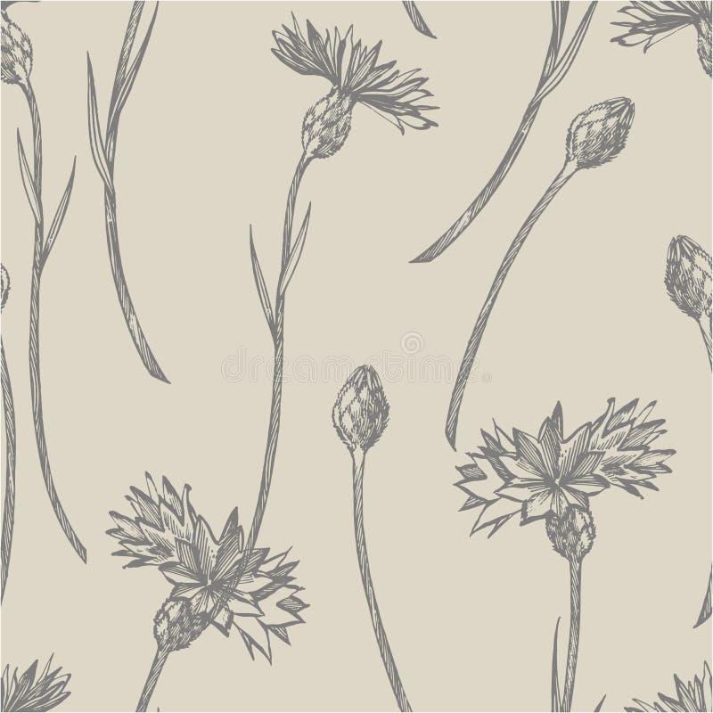 Ramo azul de la flor del bot?n de la hierba o del soltero del aciano aislado en el fondo blanco Fije de acianos de dibujo, floral stock de ilustración