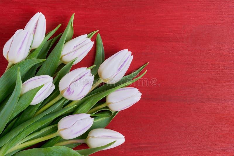 Ramo blanco de los tulipanes en fondo de madera rojo Copie el espacio, visión superior foto de archivo