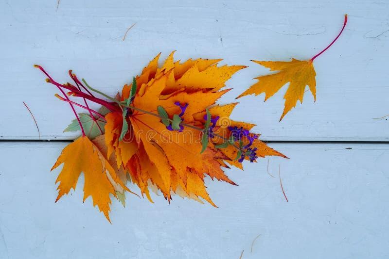 Ramo brillante de hojas caidas otoño anaranjado y de primer violeta de la flor en el parque en banco de madera ligero Endecha pla fotografía de archivo libre de regalías