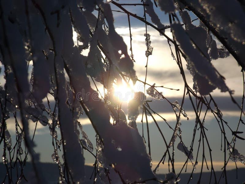 Ramo, céu, árvore, luz imagem de stock royalty free