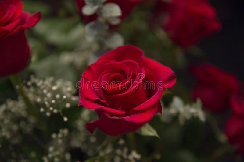 ramo color de rosa imagenes de archivo
