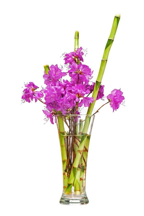 Ramo colorido de la flor de las flores púrpuras del rododendro fotografía de archivo