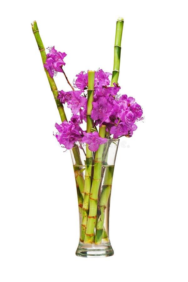 Ramo colorido de la flor de las flores púrpuras del rododendro foto de archivo libre de regalías