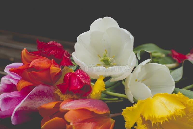 Ramo colorido de los tulipanes fotos de archivo libres de regalías