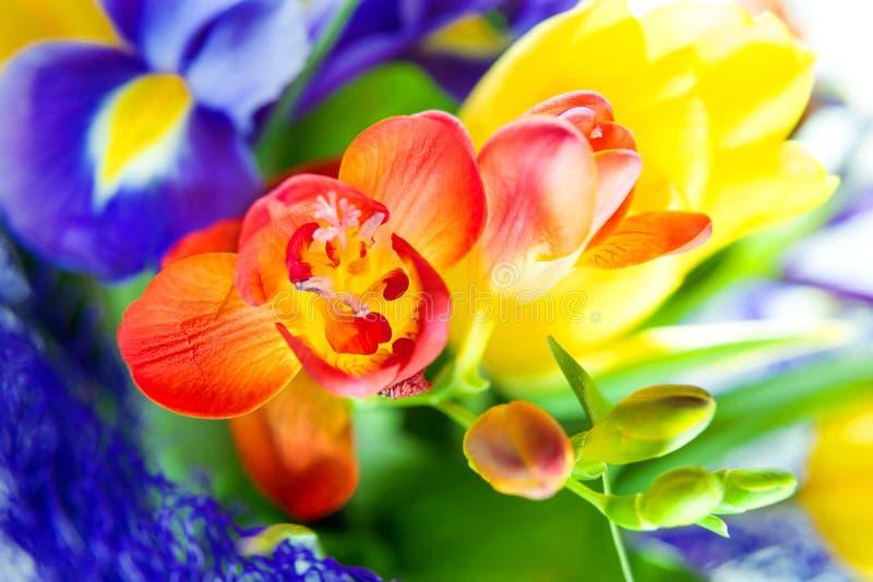Ramo colorido hermoso de flores frescas de la primavera imagen de archivo libre de regalías