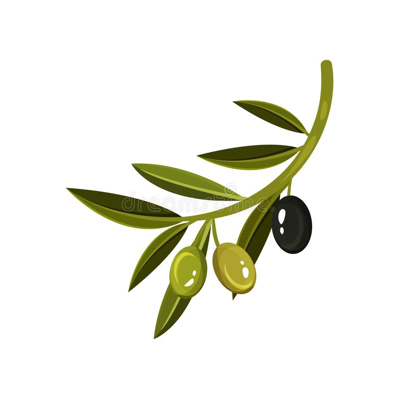 Ramo com folhas, duas azeitona verdes e uma pretas Ícone do alimento Elemento liso do vetor para a etiqueta da garrafa de óleo ilustração do vetor