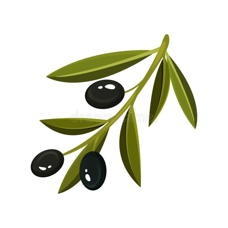 Ramo com três azeitonas pretas frescas e as folhas verde-clara Alimento natural Projeto liso do vetor ilustração do vetor