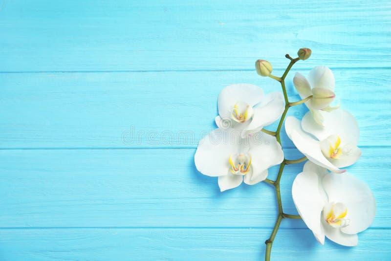 Ramo con i bei fiori tropicali dell'orchidea sul fondo di legno di colore, vista superiore fotografia stock libera da diritti
