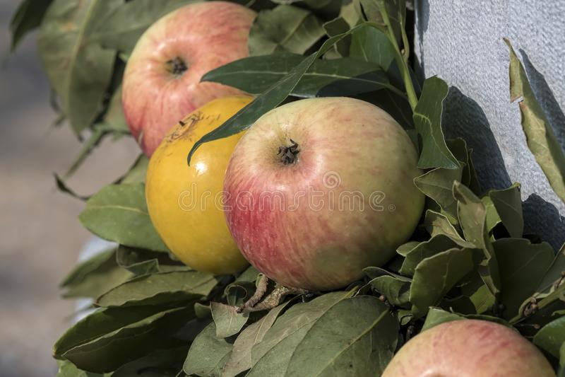 Ramo con la fruta fresca fotos de archivo