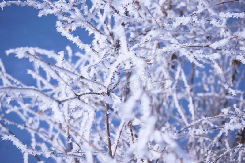 Ramo congelado bonito fotografia de stock royalty free