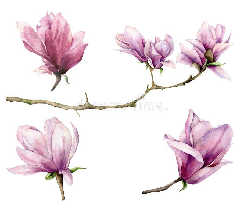 Ramo da aquarela e grupo da magnólia Flores pintados à mão isoladas no fundo branco Ilustração elegante floral para ilustração stock